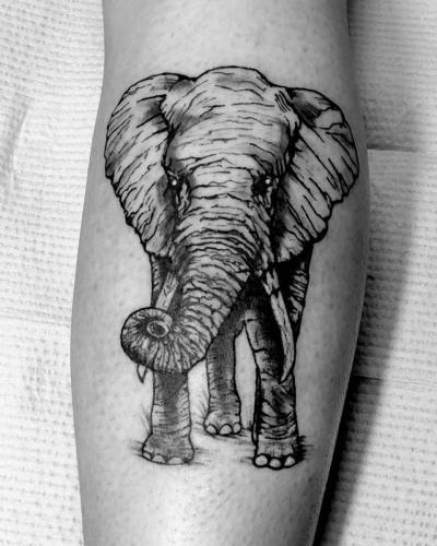 Elephant Illustrative