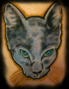 kitten portrait barry